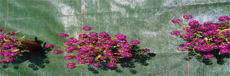 telas de suelo jardin, plastico hierbas piedra o gravillas