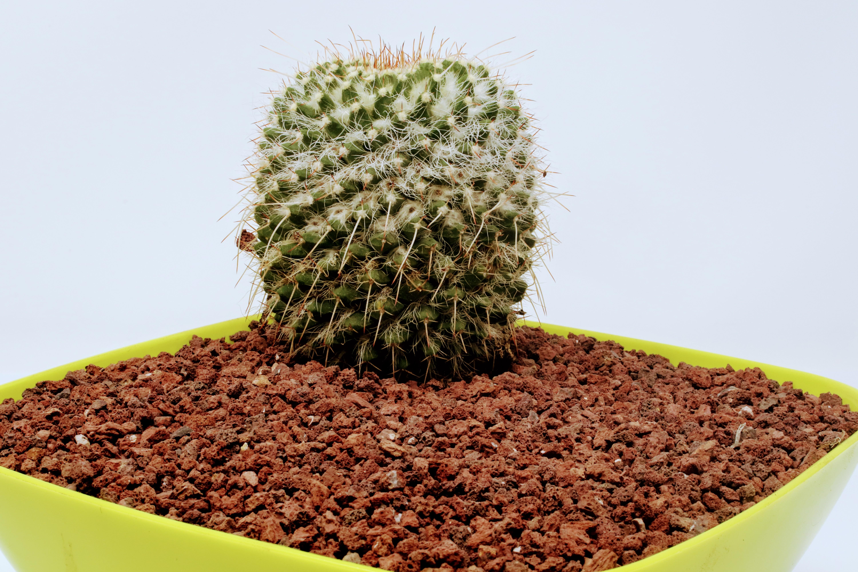 Piedra volcanica para cactus