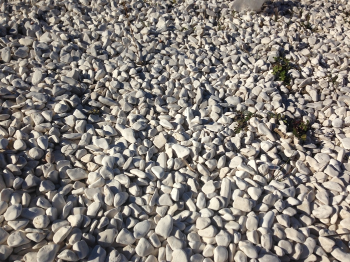 Creamy white pebbles